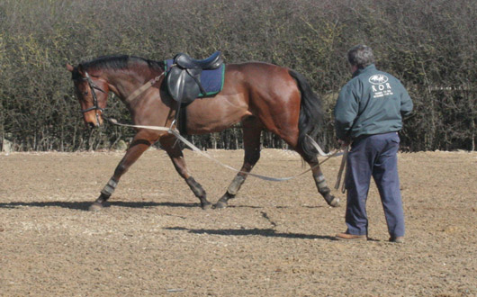 Ground Training, Backing & Schooling of the Young Horse