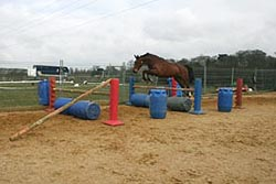 Horses can be frightened by bounces