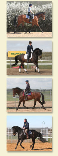 Horse Training  and Management