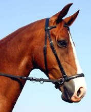 A correctly fitted bitless bridle