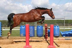 polework and jumping training by equine management and trainig