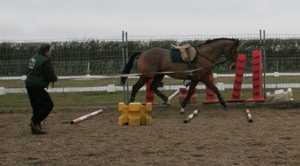 Horse working over trotting poles