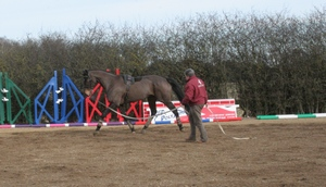 horse being lunged