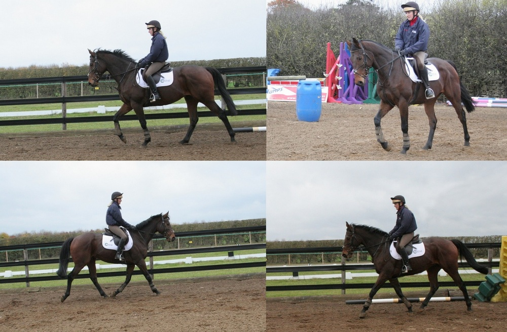 images showing early ridden work of an exracehorse